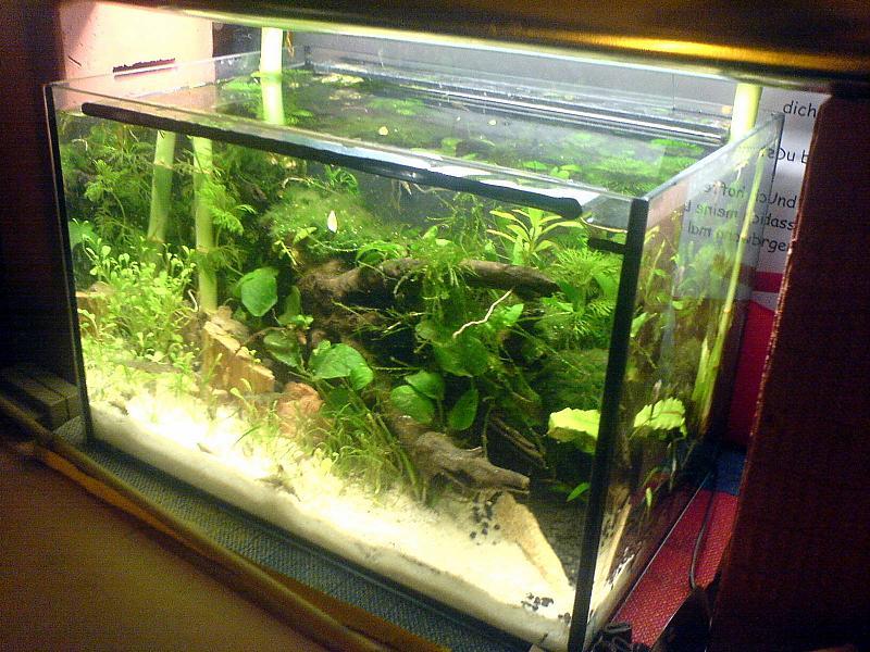 12l garnelenbecken technikfrei aufbau seite 3 aquarium forum. Black Bedroom Furniture Sets. Home Design Ideas