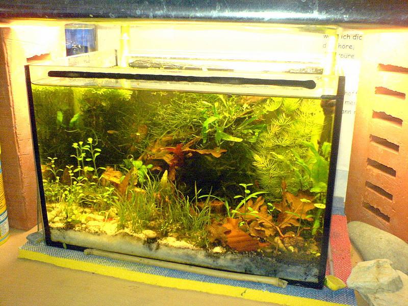 12l garnelenbecken technikfrei aufbau seite 6 aquarium. Black Bedroom Furniture Sets. Home Design Ideas