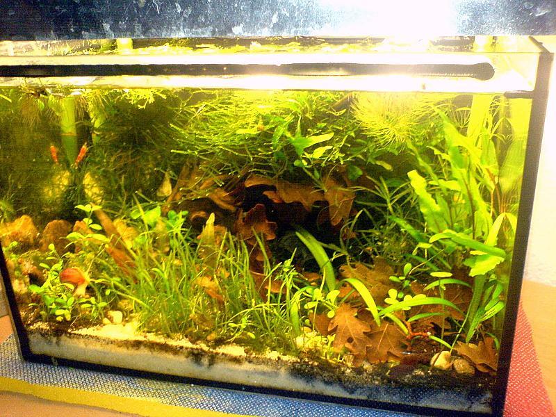 12l garnelenbecken technikfrei aufbau seite 7 aquarium forum. Black Bedroom Furniture Sets. Home Design Ideas