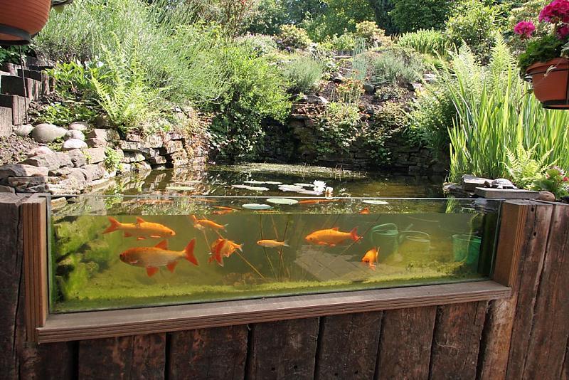 Gartenteich mit scheibe aquarium forum for Gartenteich koi