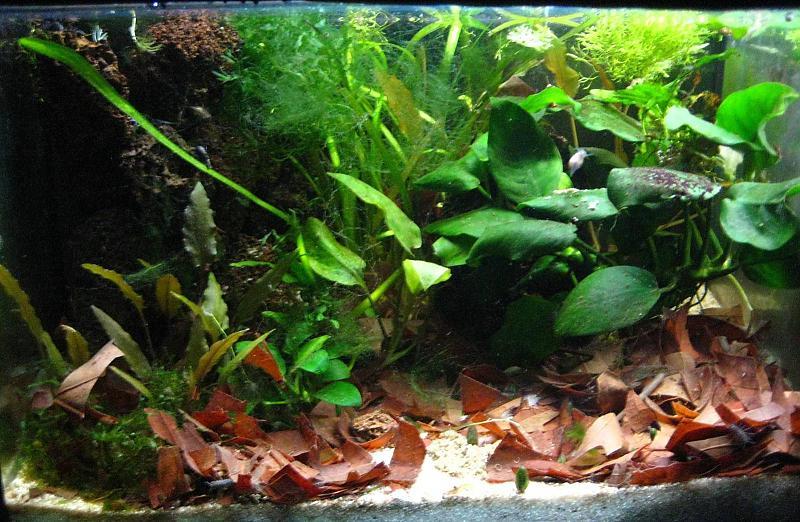8 becken 1 thread aquarium forum. Black Bedroom Furniture Sets. Home Design Ideas