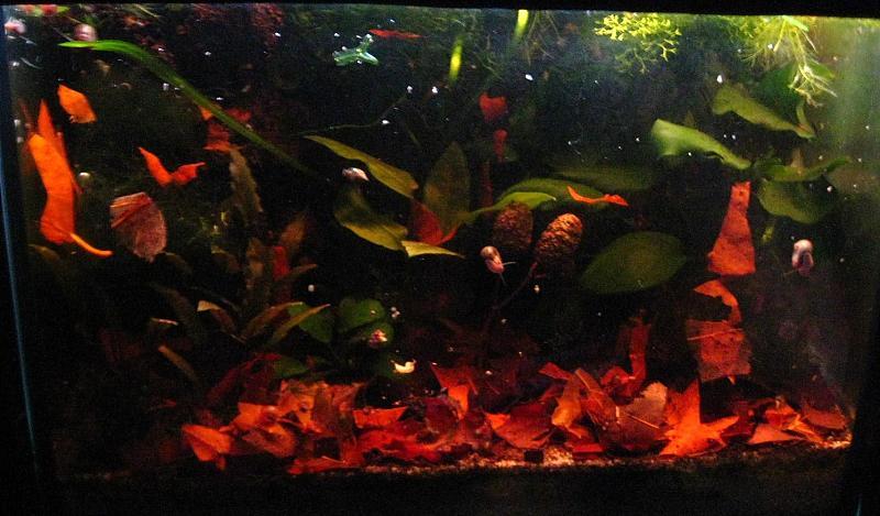 aquarium erlenzapfen