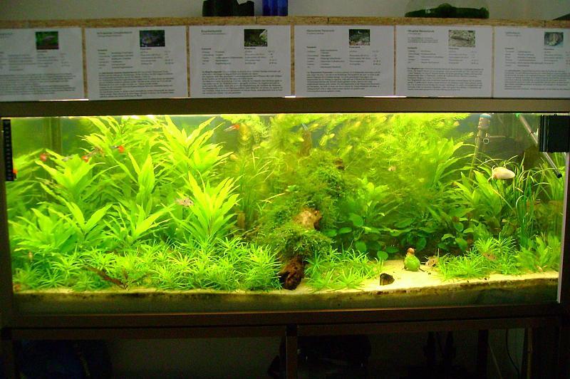 pflanzen wuchs ohne co2 anlage aquarium forum. Black Bedroom Furniture Sets. Home Design Ideas