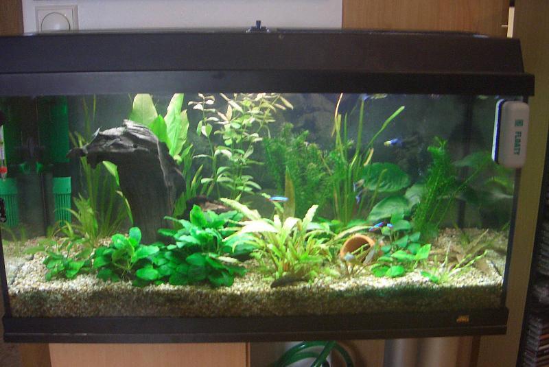 zur h lfte neu eingerichtetes 112 liter aquarium aquarium forum. Black Bedroom Furniture Sets. Home Design Ideas
