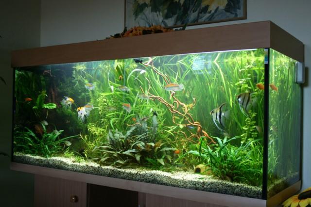 habt ihr ideen zur umgestaltung aquarium forum. Black Bedroom Furniture Sets. Home Design Ideas