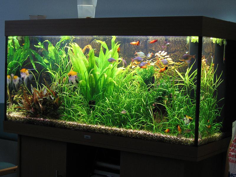 warum wachsen auf der linken seite die pflanzen nicht richtig aquarium forum. Black Bedroom Furniture Sets. Home Design Ideas