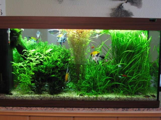 Ph wert zu niedrig durch zu viele pflanzen aquarium forum for Aquarium einrichtungsideen