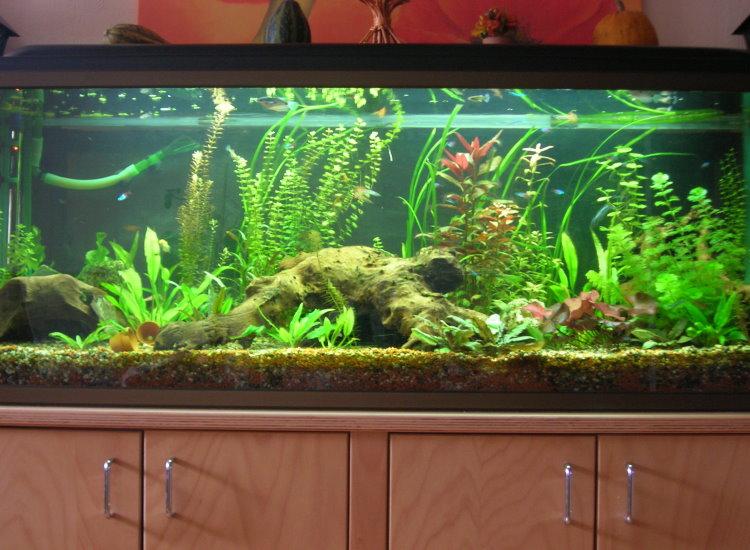 500 liter gesellschaftsbecken aquarium forum. Black Bedroom Furniture Sets. Home Design Ideas