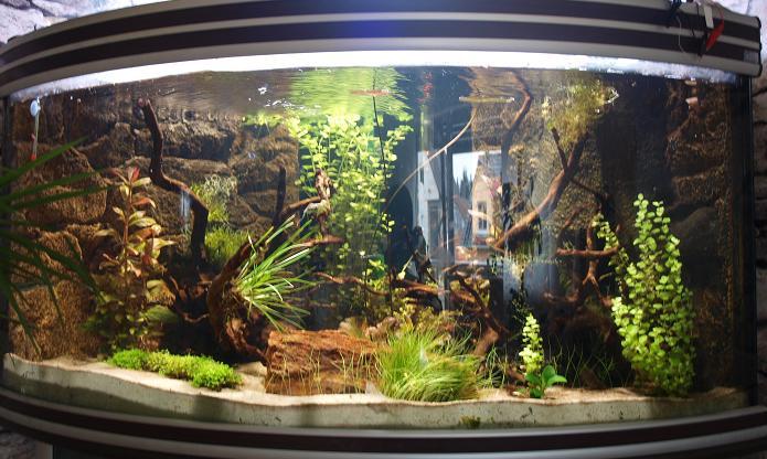 neueinrichtung 300l gesellschaftsbecken offen aquarium forum. Black Bedroom Furniture Sets. Home Design Ideas