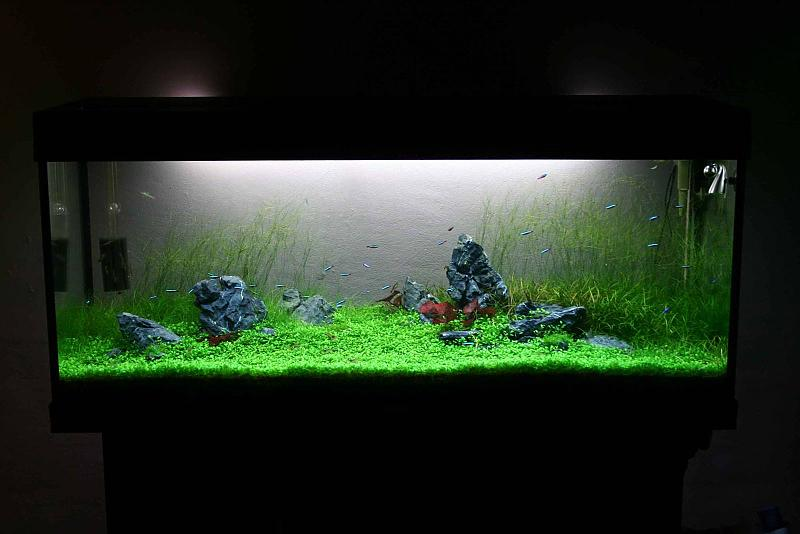 umgestaltung 240 liter naturaquarium aquarium forum. Black Bedroom Furniture Sets. Home Design Ideas