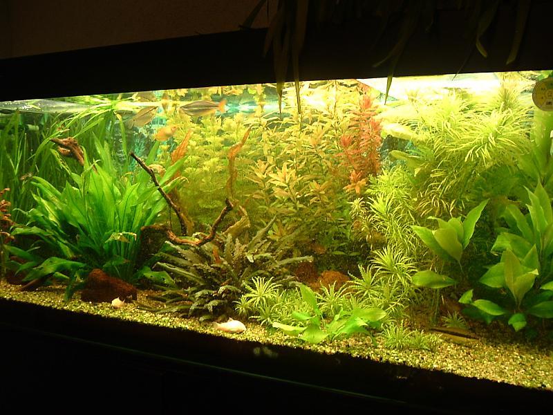 ich bin neu hier aquarium forum. Black Bedroom Furniture Sets. Home Design Ideas