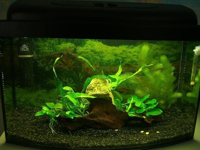 30 liter aq statt zimmerpflanze fürs büro