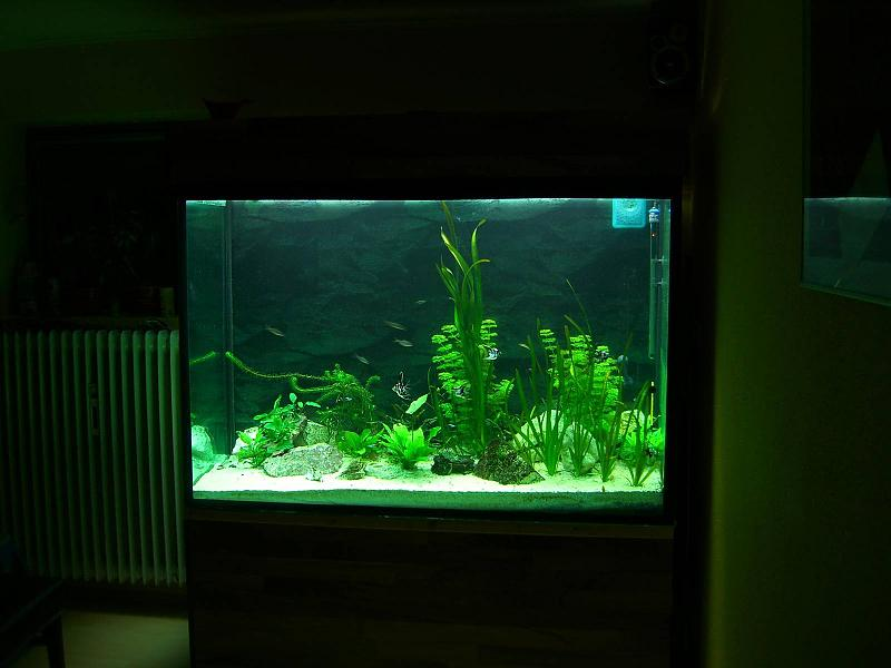 milchiges tr bes wasser seite 2 aquarium forum. Black Bedroom Furniture Sets. Home Design Ideas