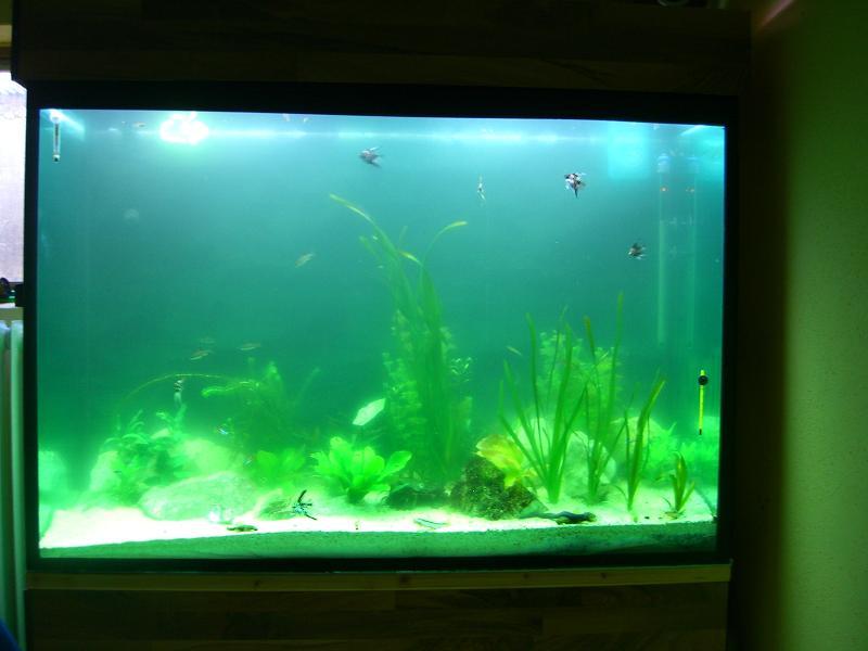 milchiges tr bes wasser aquarium forum. Black Bedroom Furniture Sets. Home Design Ideas