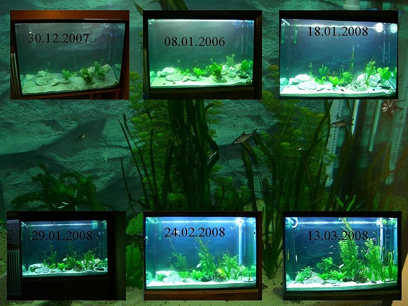 milchiges tr bes wasser seite 2 aquarium forum. Black Bedroom Furniture Sets. Home Design Ideas