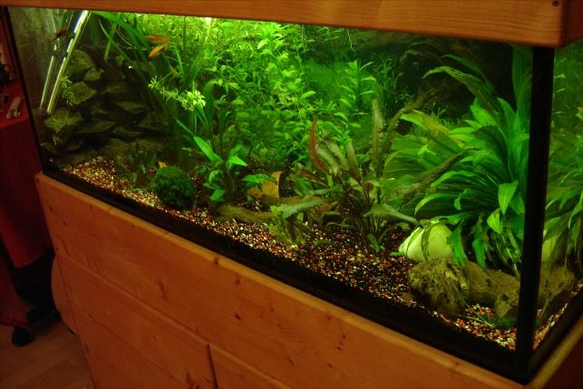 gibt es robuste fische seite 3 aquarium forum