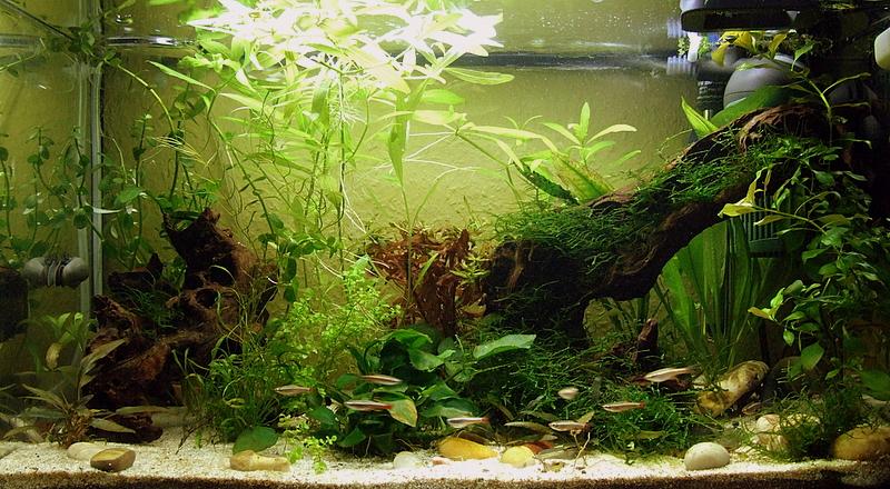 63l becken einige fragen seite 3 aquarium forum for Indische einrichtungsideen
