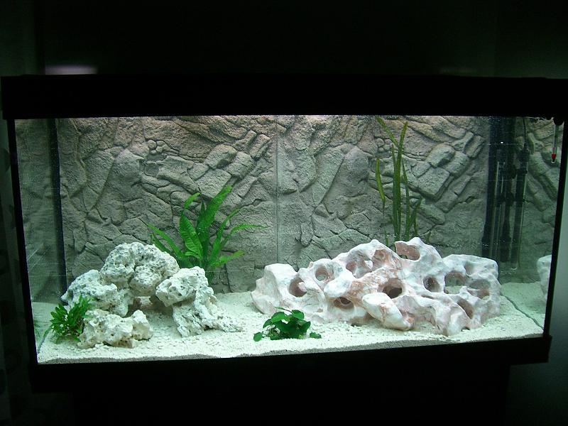 Blaualgen w hrend dunkelkur weiter d ngen aquarium forum for Aquarium einrichtung