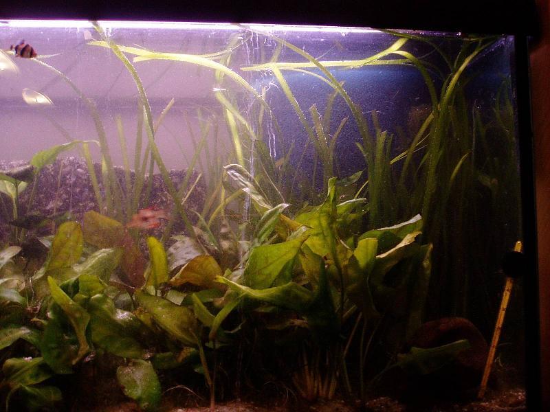 beschreibung nachr sten eines 160l aquariums mit einem. Black Bedroom Furniture Sets. Home Design Ideas