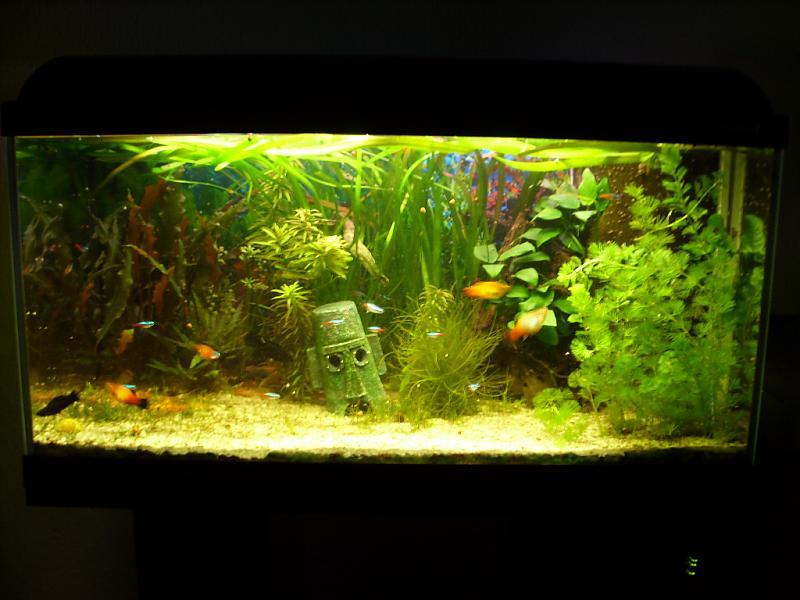 kitsch im aquarium seite 3 aquarium forum. Black Bedroom Furniture Sets. Home Design Ideas