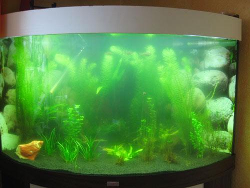 hilfe ich sehe meine fische nicht mehr tr bes wasser aquarium forum. Black Bedroom Furniture Sets. Home Design Ideas