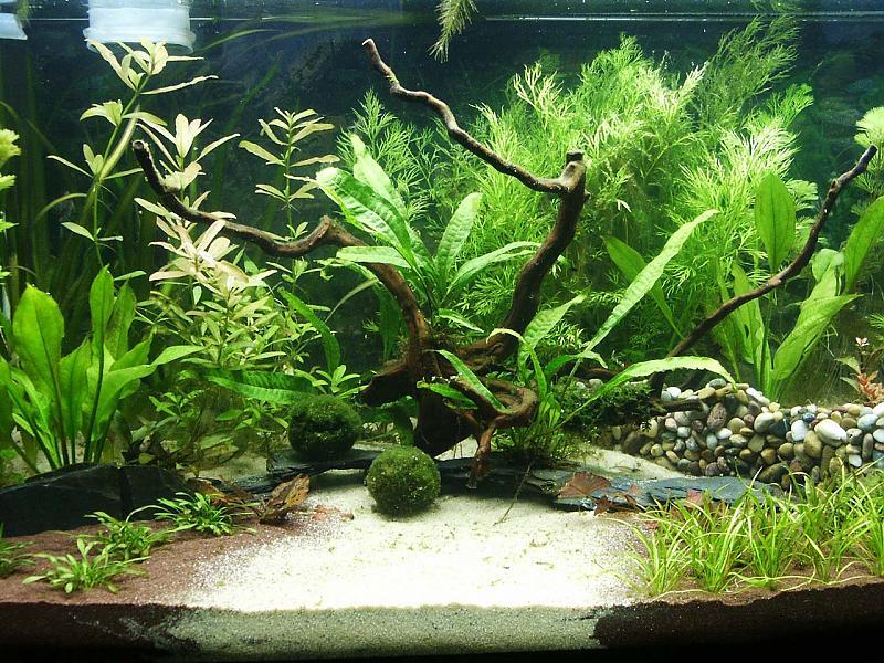 endlich mein neues 375l becken aquarium forum. Black Bedroom Furniture Sets. Home Design Ideas