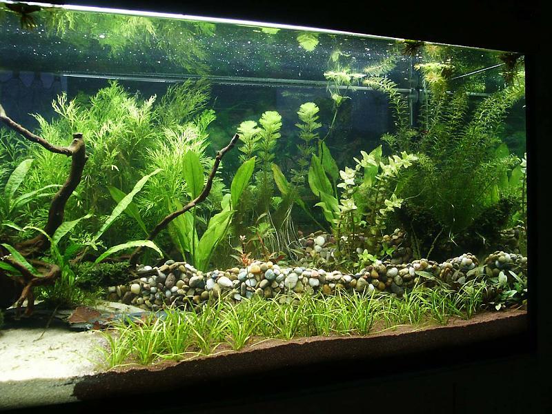 klappt das so mit der terasse aquarium forum. Black Bedroom Furniture Sets. Home Design Ideas