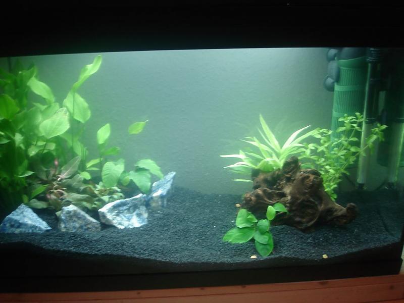 hilfe tr bes wasser und p nktchen auf d bl ttern aquarium forum. Black Bedroom Furniture Sets. Home Design Ideas