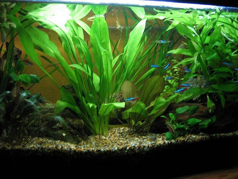 Mein erstes aquarium 54 liter aber trotzdem kein standard for Aquarium einsteiger