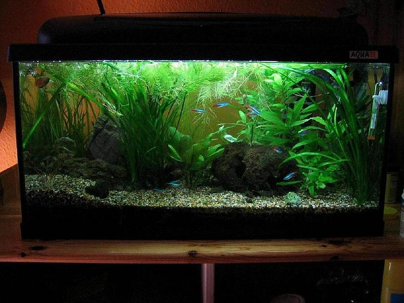 mein erstes aquarium 54 liter aber trotzdem kein standard. Black Bedroom Furniture Sets. Home Design Ideas