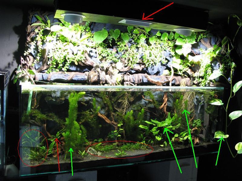 offenes 600l paludarium mit nanofischen und garnelen doku mit vielen pics seite 9 aquarium. Black Bedroom Furniture Sets. Home Design Ideas