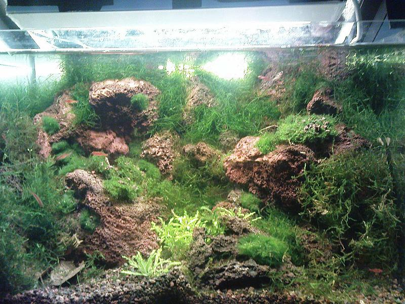 gr nes s wasser nano riff aquarium forum. Black Bedroom Furniture Sets. Home Design Ideas