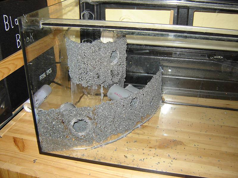 forum fische wer kennt welsarten die f r kies geeignet sind. Black Bedroom Furniture Sets. Home Design Ideas