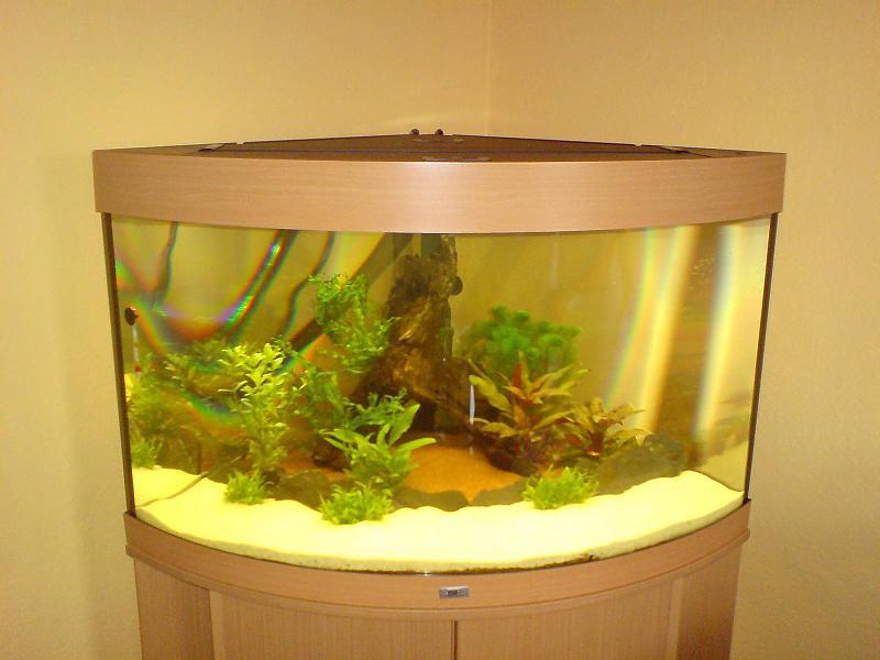 unser eck aquarium trigon 190 aquarium forum. Black Bedroom Furniture Sets. Home Design Ideas