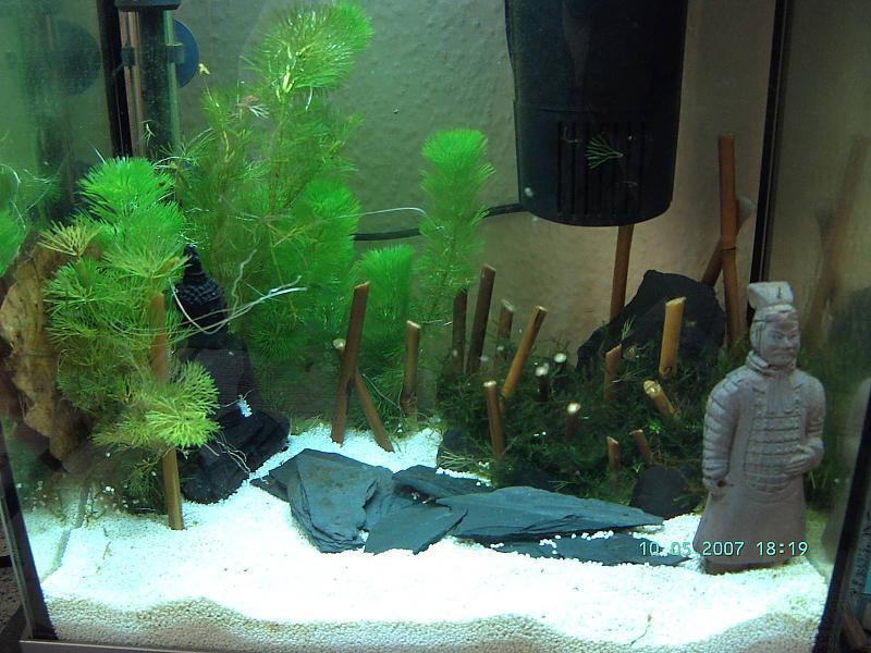 Bambus Im Becken Aquarium Forum