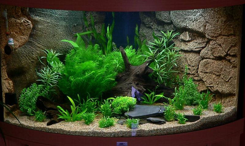juwel trigon 190 aquarium forum. Black Bedroom Furniture Sets. Home Design Ideas