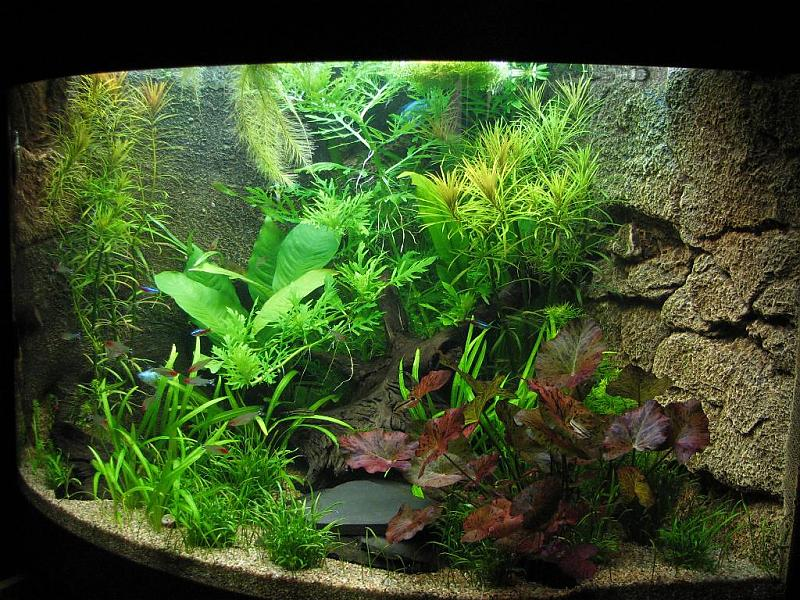 juwel trigon 190 aquarium forum. Black Bedroom Furniture Sets. Home Design Ideas