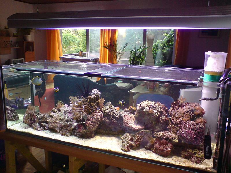 mein erstes meerwasseraquarium bitte um rat und verbesserungsvorschl ge aquarium forum. Black Bedroom Furniture Sets. Home Design Ideas