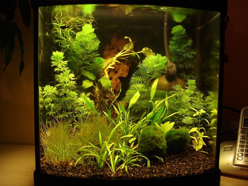 jati wurzel grund f r verschwundene fische aquarium forum. Black Bedroom Furniture Sets. Home Design Ideas