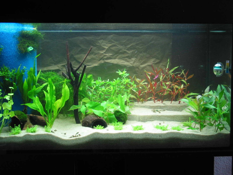 knochenhartes wasser und trotzdem aquarium forum. Black Bedroom Furniture Sets. Home Design Ideas