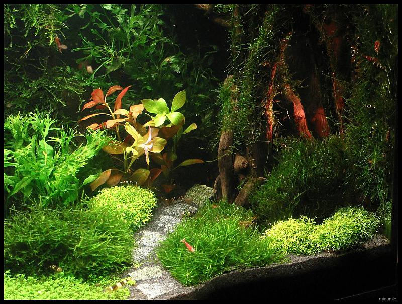 sharplace aquarium moosgitter pflanzen halter f r moos wasserpflanzen aquarium prima. Black Bedroom Furniture Sets. Home Design Ideas