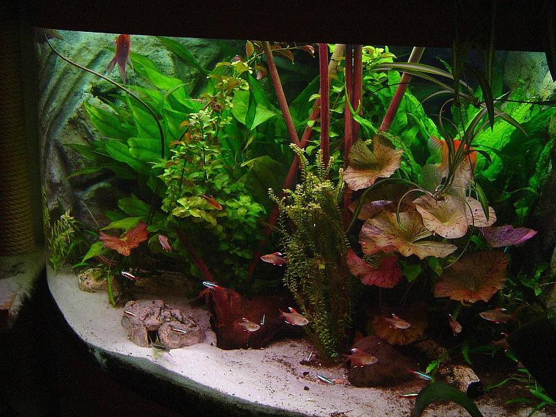 Decoration Aquarium Hippocampe