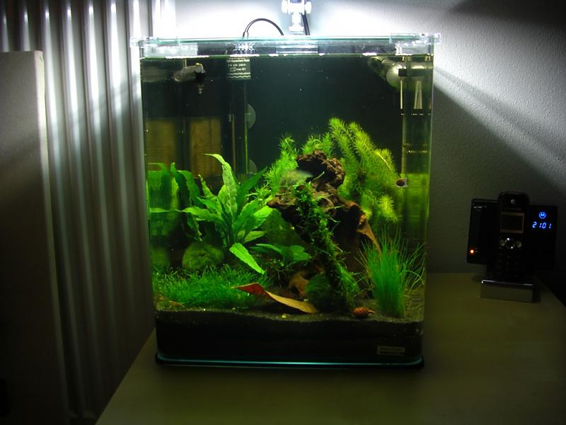 mein dennerle nano cube 30l aquarium forum. Black Bedroom Furniture Sets. Home Design Ideas