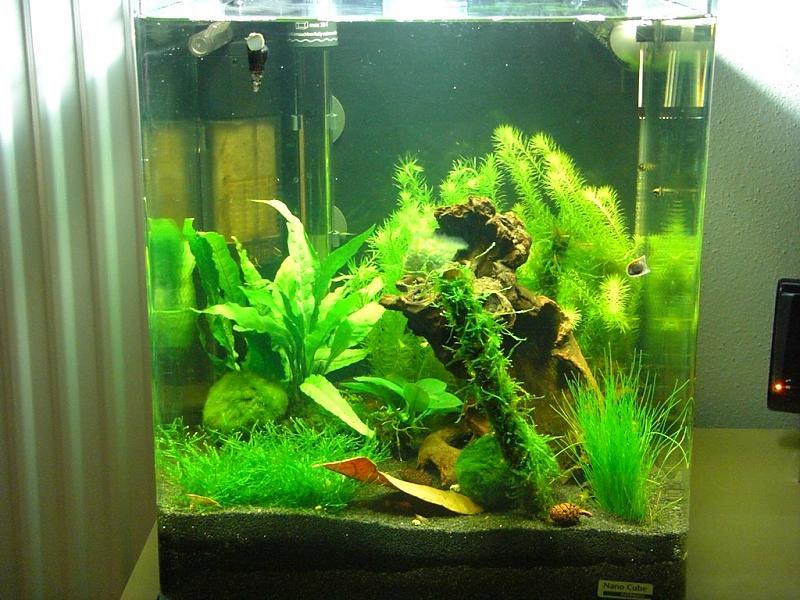 Mein dennerle nano cube 30l aquarium forum for Kampffisch aquarium
