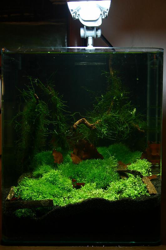 mikro spritzsalmler da was nun seite 4 aquarium forum. Black Bedroom Furniture Sets. Home Design Ideas