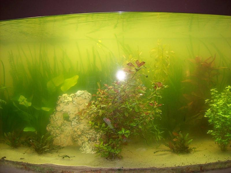 wasser tr b alle blichen ursachen ausgeschlossen aquarium forum. Black Bedroom Furniture Sets. Home Design Ideas