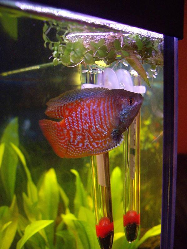 Mein neues 112l aquarium aquarium forum for Fadenfische zucht