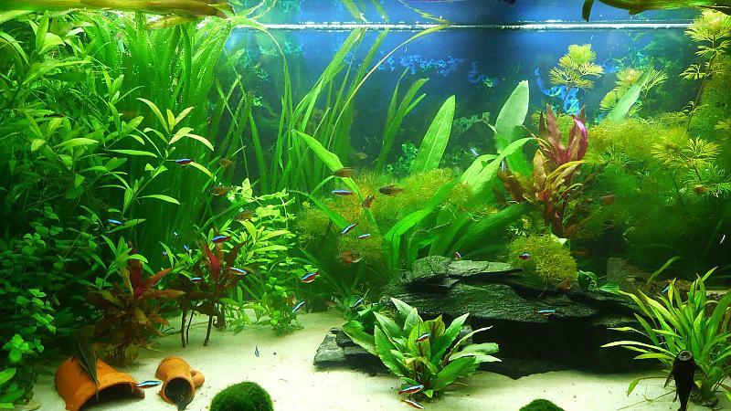 Mein 300l gesellschaftsbecken aquarium forum for Aquarium einrichtungsideen