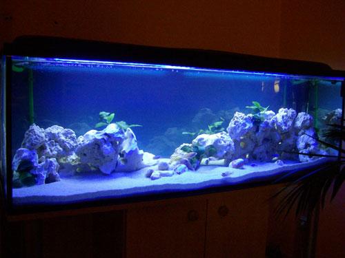 Barschis malawi becken aquarium forum for Malawi buntbarsch