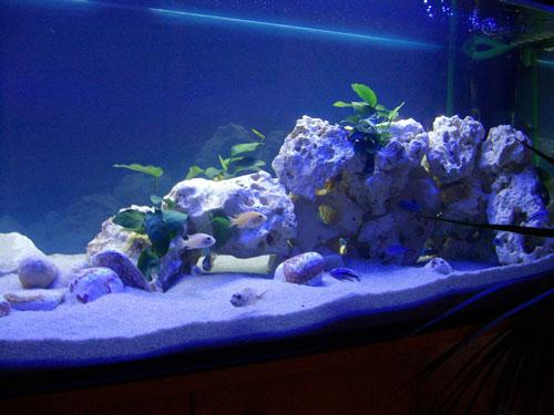 barschis malawi becken aquarium forum. Black Bedroom Furniture Sets. Home Design Ideas